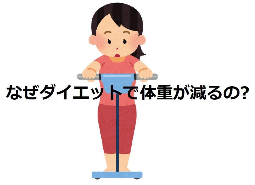 ダイエットで体重が減るのはなんで
